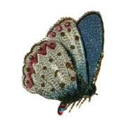 The blue butterfly of creativity